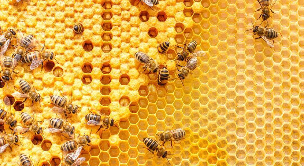 Una colmena con abejas sobre ella